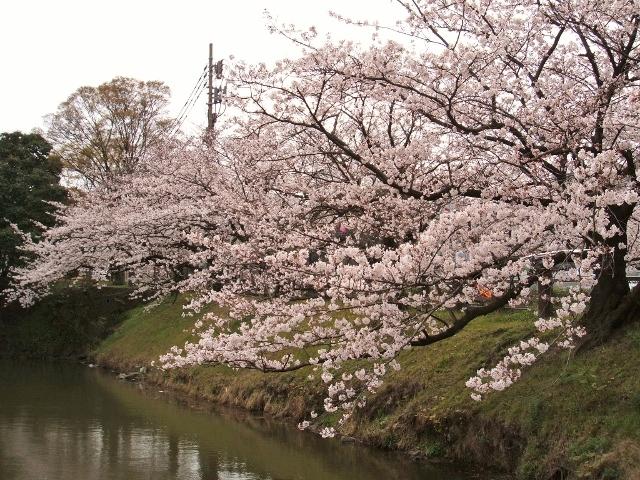 2011☆SAKURA